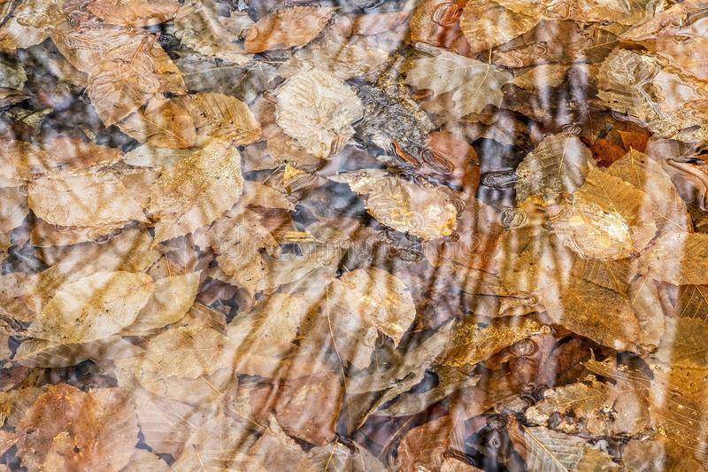 束在水水坑的叶子  免版税库存照片
