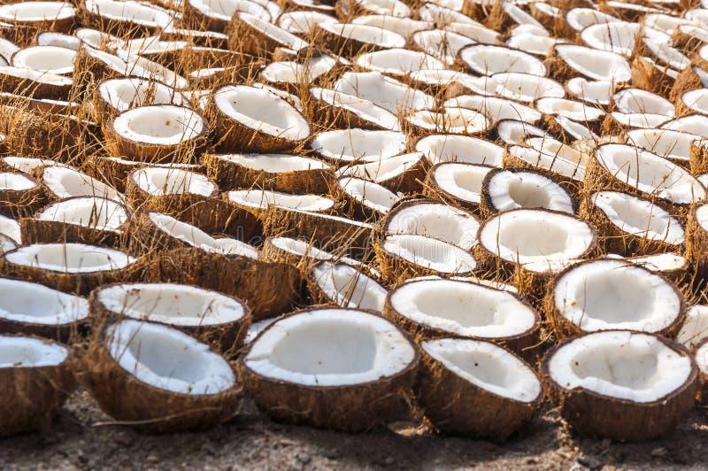 束在烘干的地面上折叠的椰子一半 图库摄影