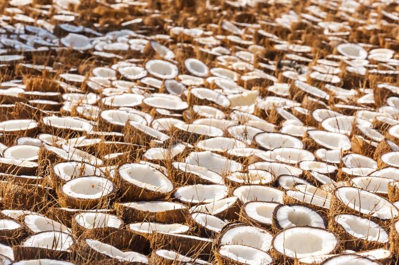 束在烘干的地面上折叠的椰子一半 库存照片