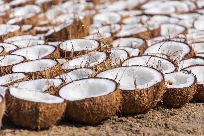 束在烘干的地面上折叠的椰子一半 免版税图库摄影