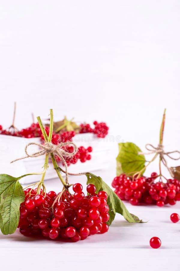 束在白色背景的新鲜的成熟有机荚莲属的植物莓果 维生素饮料的成份 库存图片