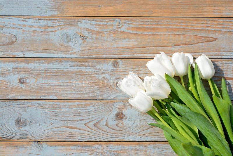 束在蓝灰色的白色郁金香打结了与空的空间布局的老木背景 库存图片