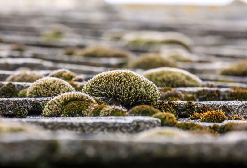 束在铺磁砖的屋顶的五颜六色的青苔 库存照片