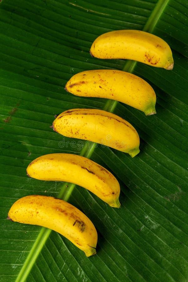 束在香蕉叶子的新鲜的香蕉,顶视图,垂直的comp 免版税库存图片