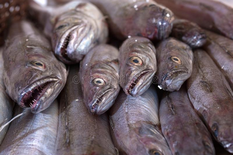 束在鱼贩子的无须鳕 免版税库存图片