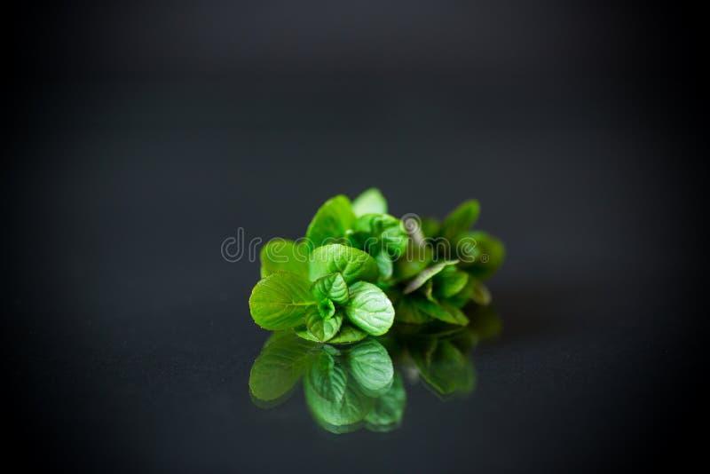 束在黑背景的新鲜的绿色薄菏 免版税库存图片