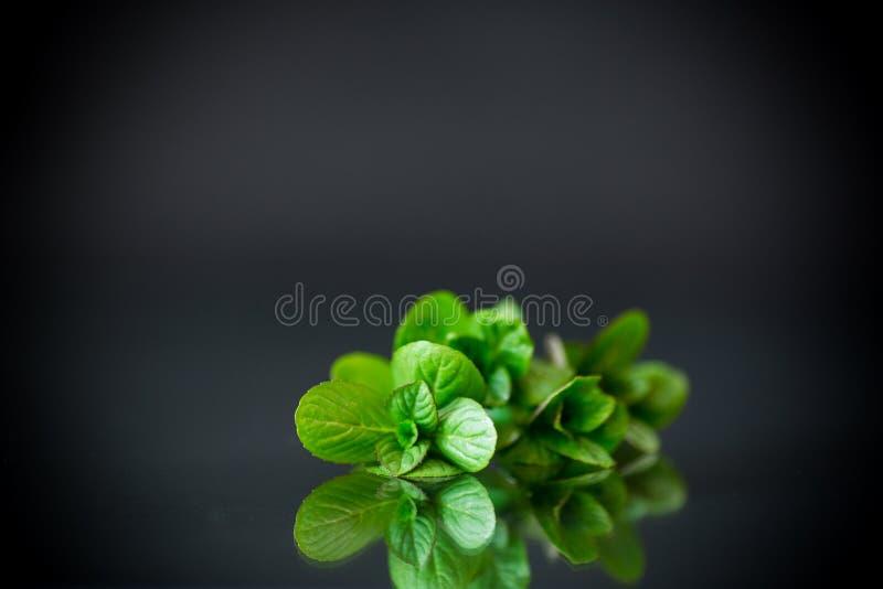 束在黑背景的新鲜的绿色薄菏 图库摄影