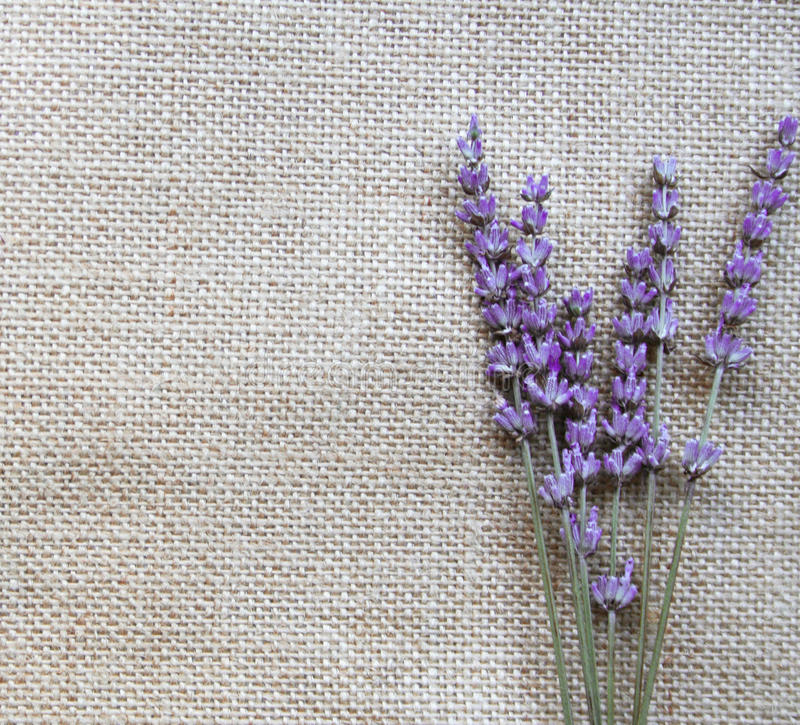 束开花淡紫色丁香麻袋布 免版税库存图片