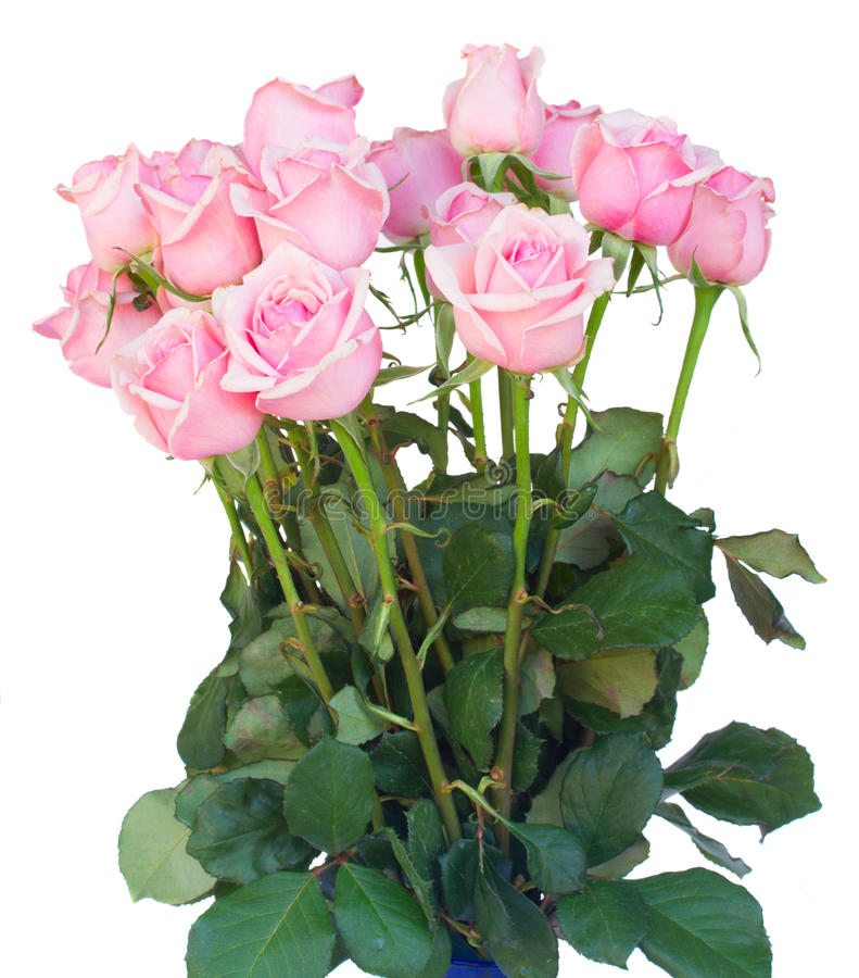 束新鲜的桃红色玫瑰 免版税图库摄影