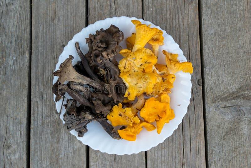 束新鲜的橙色和黑黄蘑菇 库存照片