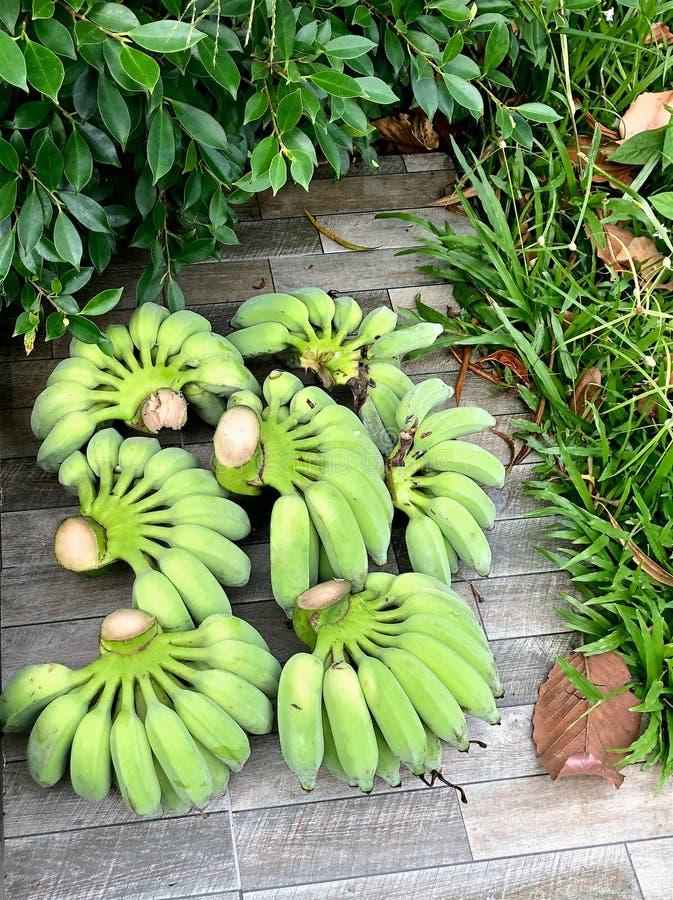 束新鲜的绿色香蕉在庭院道路说谎 库存图片