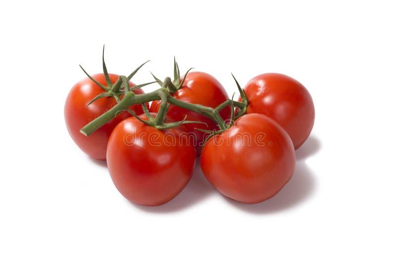 束新鲜的蕃茄 库存图片
