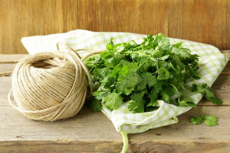 束新鲜的绿色香菜(香菜) 库存照片