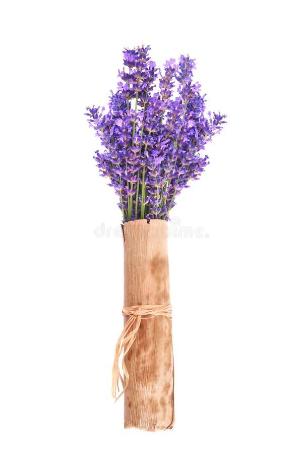 束淡紫色 图库摄影