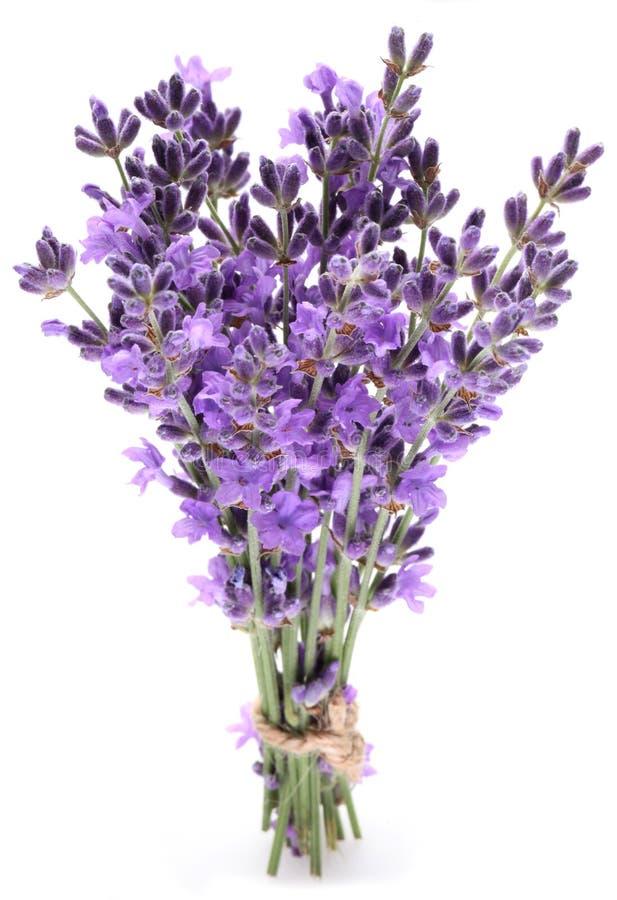 束淡紫色。 免版税库存图片