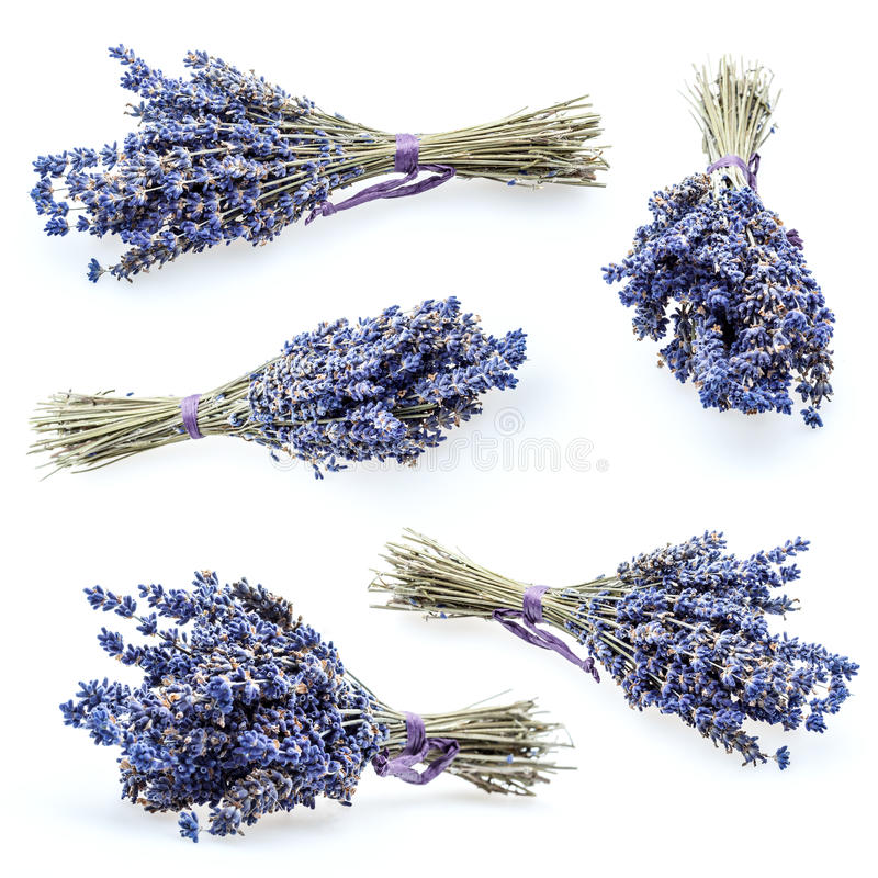 束淡紫色 免版税图库摄影
