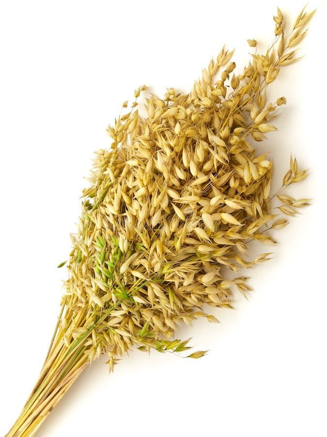 束燕麦 免版税库存照片