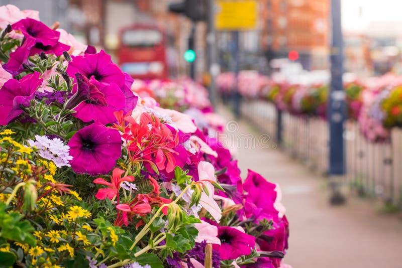 束特写镜头在街道上的紫色和浅粉红色的花 免版税库存照片