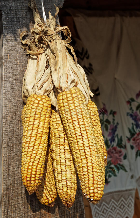 束玉米 免版税库存图片