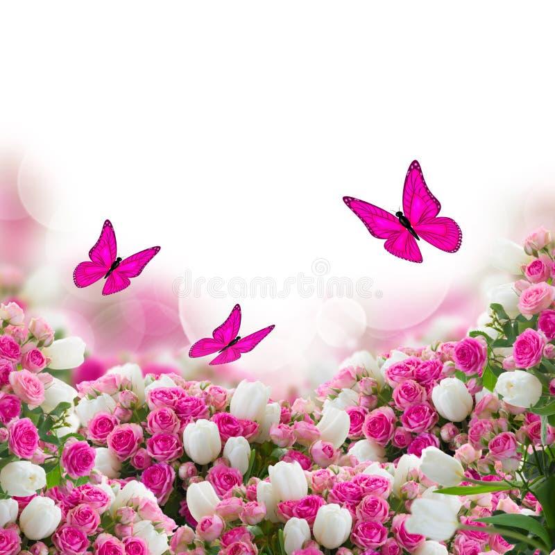 束玫瑰和郁金香开花与蝴蝶 图库摄影
