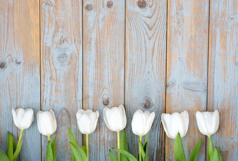 束白色郁金香在蓝灰色连续打结了与空的空间布局的老木背景 库存图片
