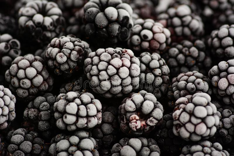 束紧密冷冻黑莓 库存图片
