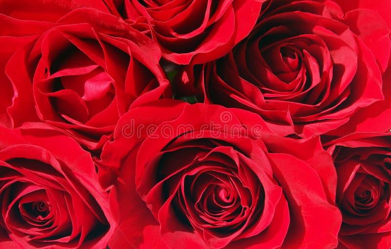 束红色玫瑰 免版税库存图片