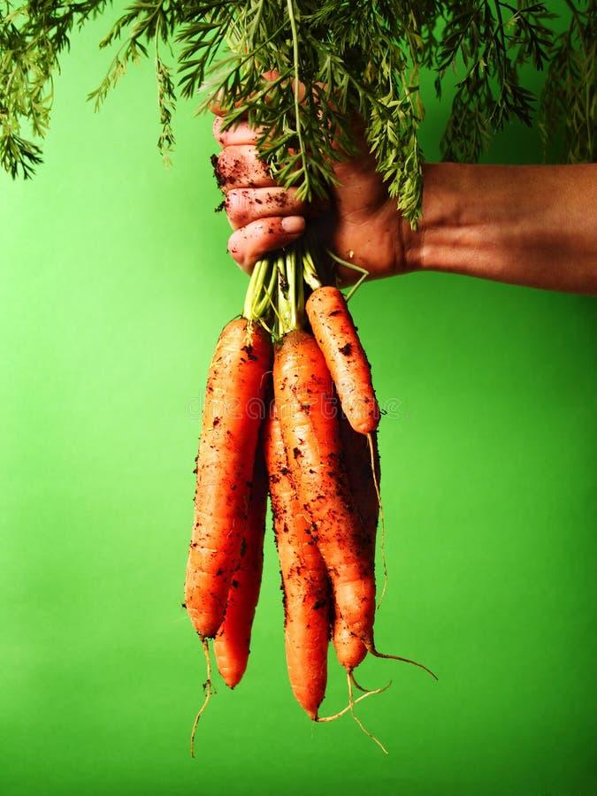 束红萝卜 库存照片