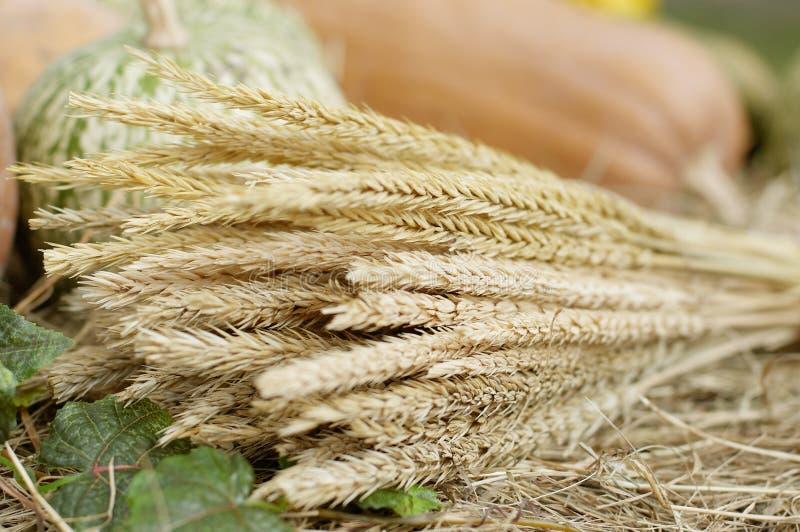 束耳朵麦子 免版税库存照片