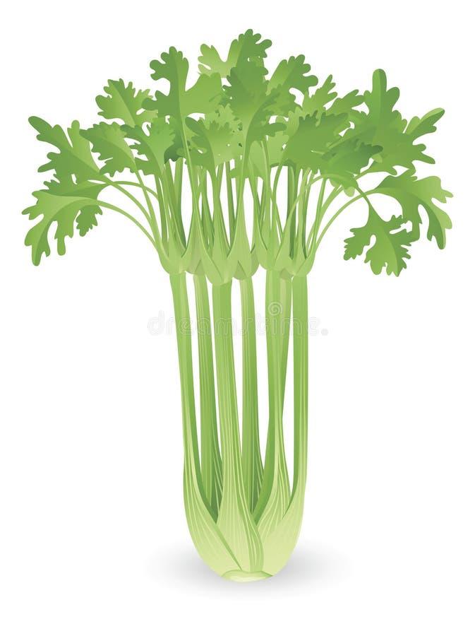 束芹菜例证 向量例证