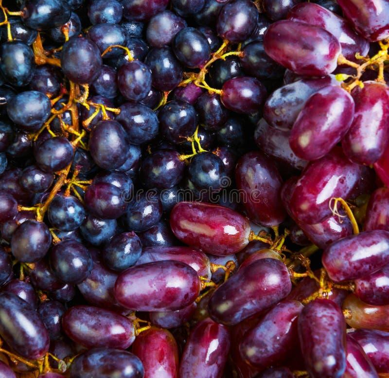 束蓝色紫色葡萄 库存图片