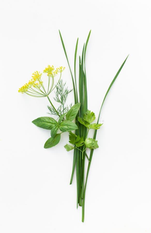 束蓬蒿、荷兰芹、莳萝和jusai在白色 图库摄影