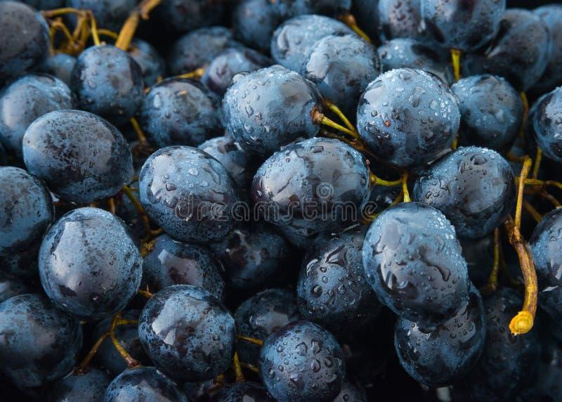 束藤葡萄或Berlandieri葡萄样式 库存照片