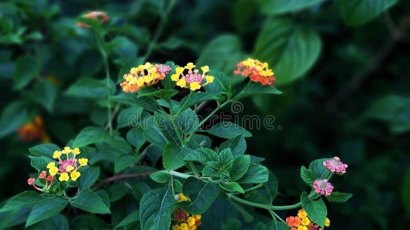 束野花在公园庭院里 库存图片