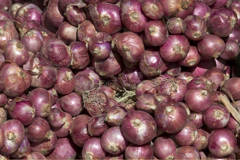 Download 束青葱在市场上,堆红色紫色大电灯泡青葱,许多青葱 库存图片. 图片 包括有 重婚, 许多, 阿诺德, 庭院 - 62533849