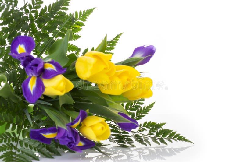 束黄色郁金香和蓝色虹膜在白色背景 库存照片
