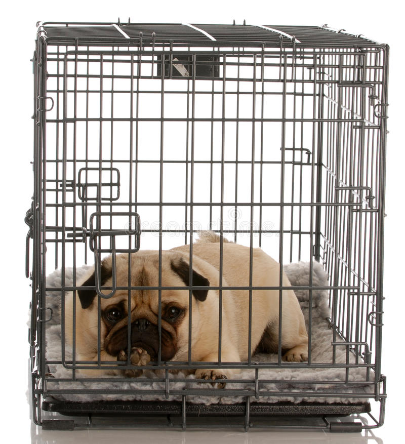 条板箱狗电汇 库存图片