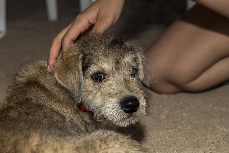来到您的新出生的小狗 免版税库存照片