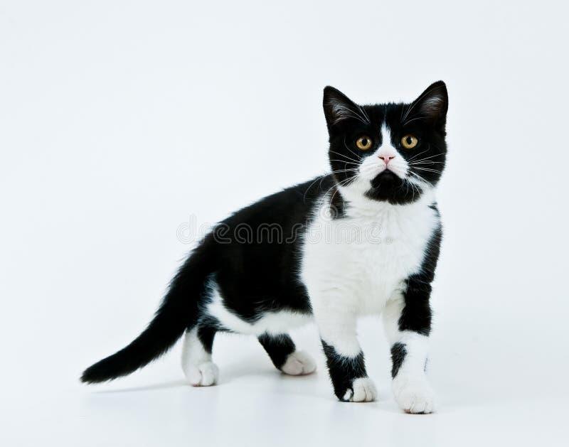 来的小猫 库存图片