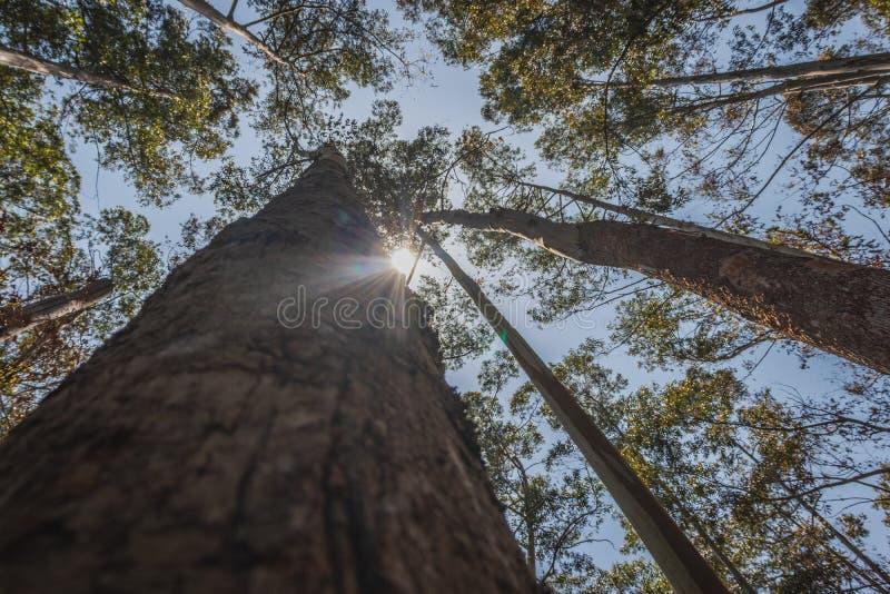 来自树背景的太阳 免版税库存照片