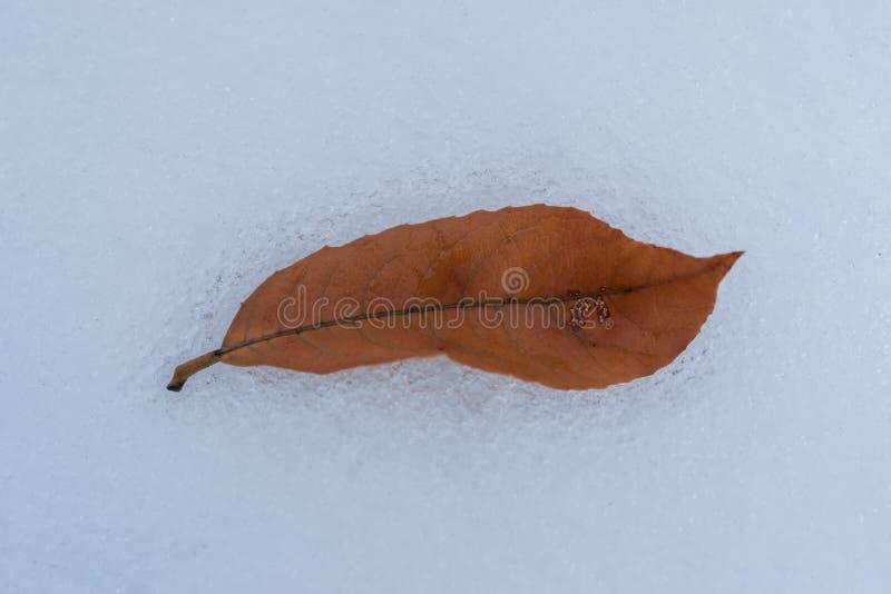 杨柳在雪融解期间的秋天叶子 库存照片