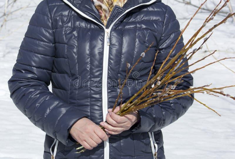 杨柳的被切开的枝杈 免版税库存照片