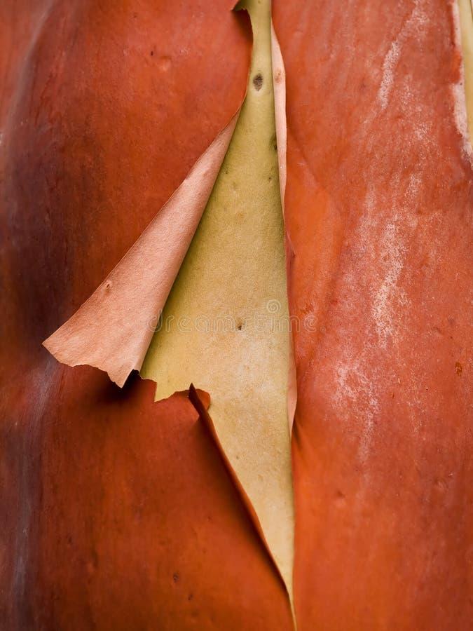 杨梅石南太平洋结构树 免版税库存图片
