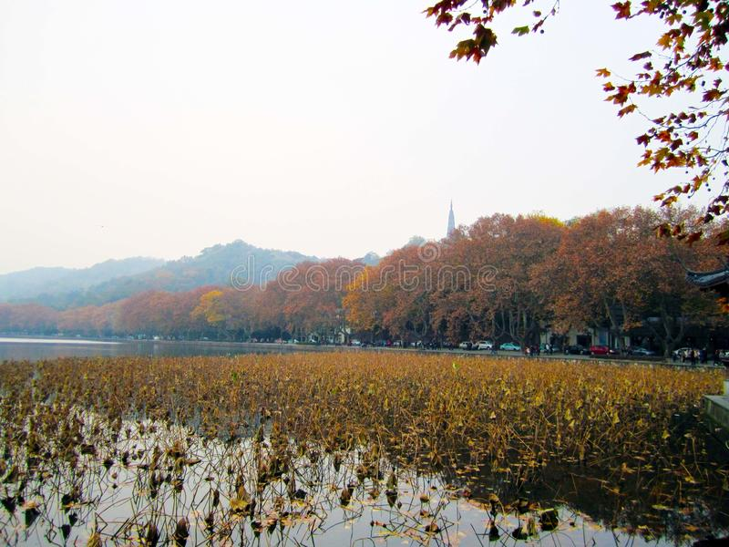 杭州市西湖染黄塔的秋叶 免版税库存图片