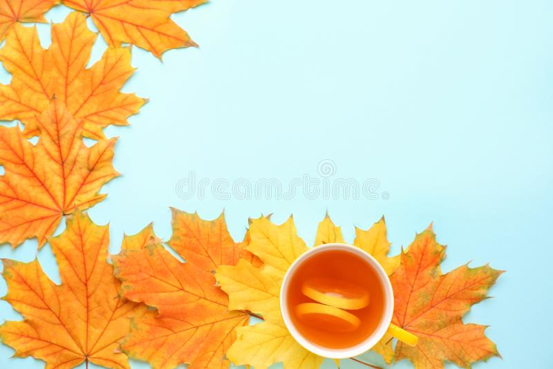 杯与秋叶的芳香茶在颜色背景 库存图片