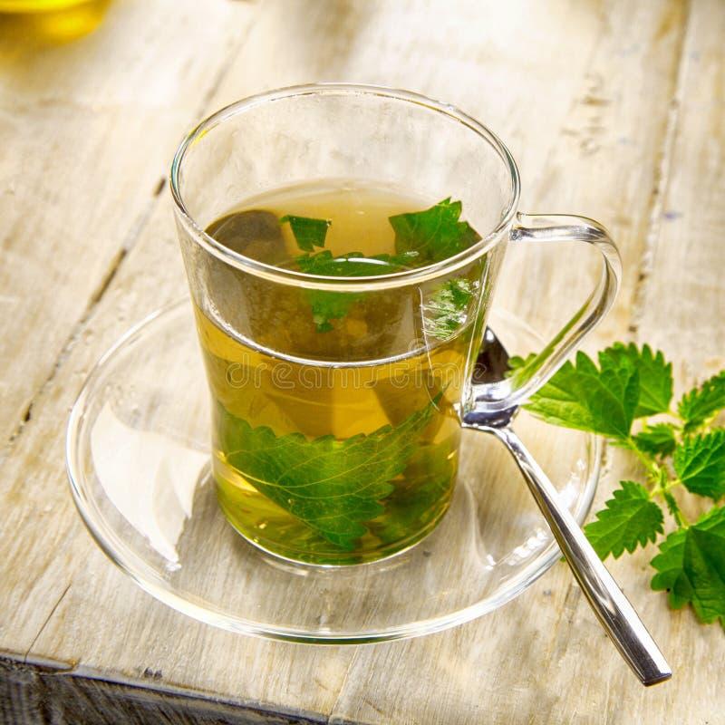 杯健康刺人的荨麻茶 免版税库存图片