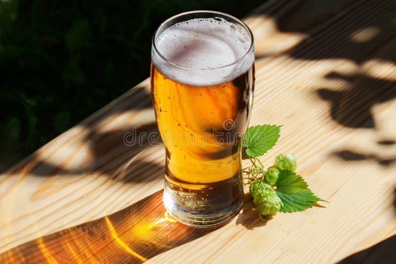 杯啤酒用在木太阳,庭院的蛇麻草 库存照片
