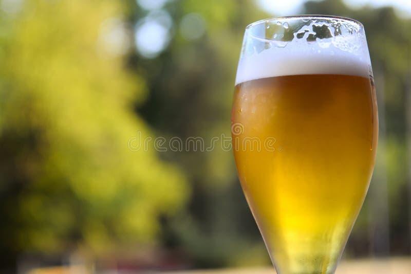 杯在大阳台的啤酒 免版税库存照片