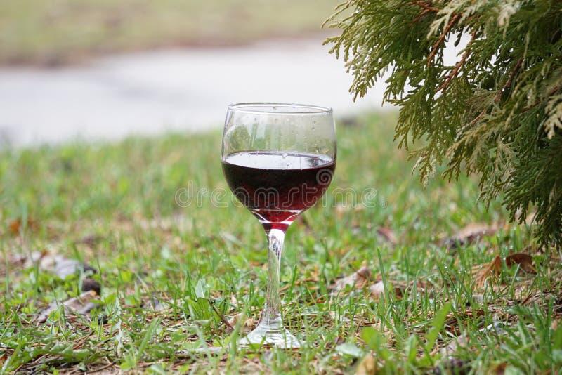 杯在绿草的红葡萄酒 免版税库存图片
