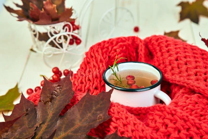 杯子与红色的热的荚莲属的植物茶温暖被编织的围巾 库存图片